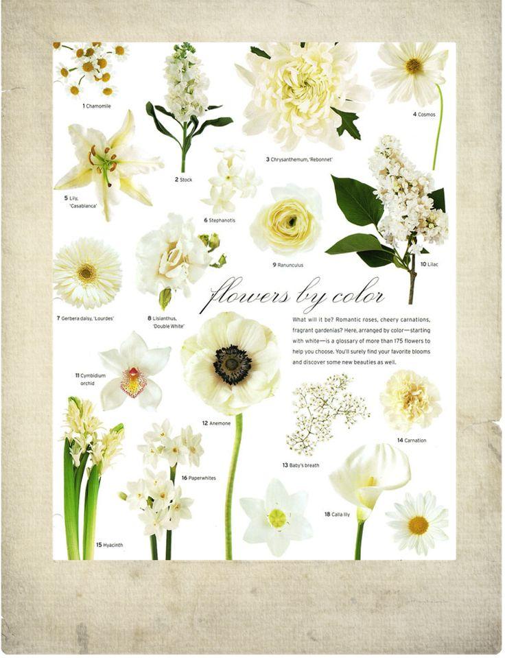White flowers~ vintage, garden, feminine flowers/ bouquets/ wedding arrangements