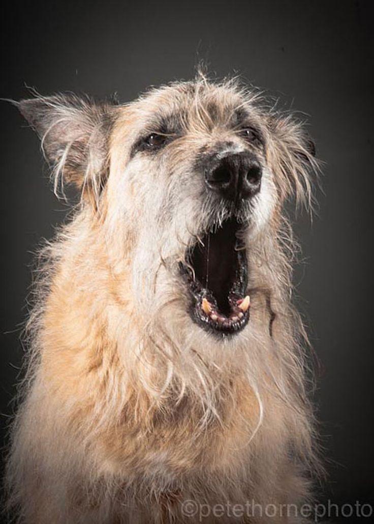 Emmy, 14 años  Old Faithful: Conmovedora Serie de Retratos de Perros en Avanzada Edad | FuriaMag | Arts Magazine