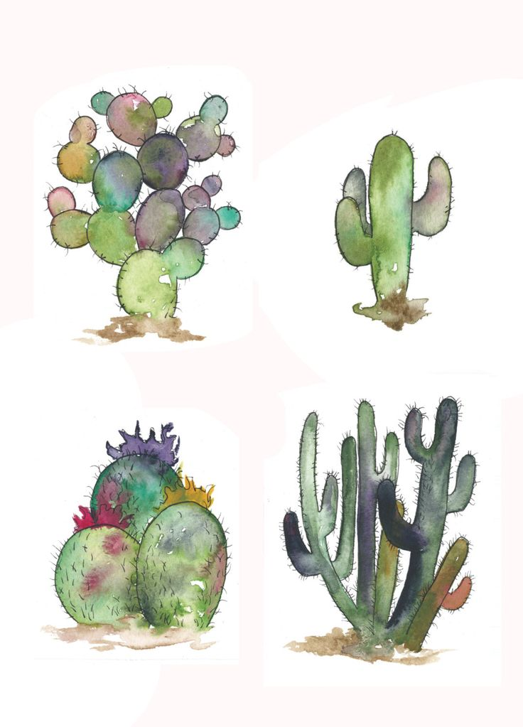 A Set Of Four 4x6 Watercolor Cactus, Cactus Prints by boyandbuffalo on Etsy