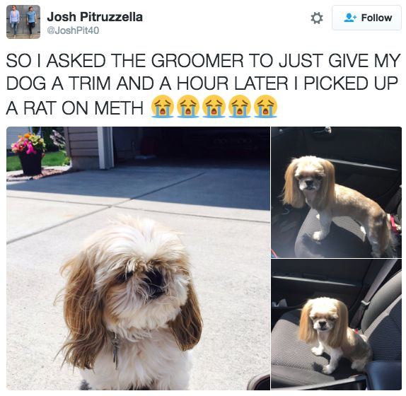 This Dog's Unfortunate Haircut Had Her Owner in Tears