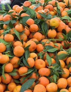 Spinach and Tangerine Salad - Winter is peak season for citrus fruits like tangerines. Enjoy!