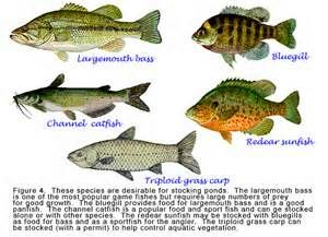 1000 images about types of fish to stock in florida ponds for Types of fish that live in ponds