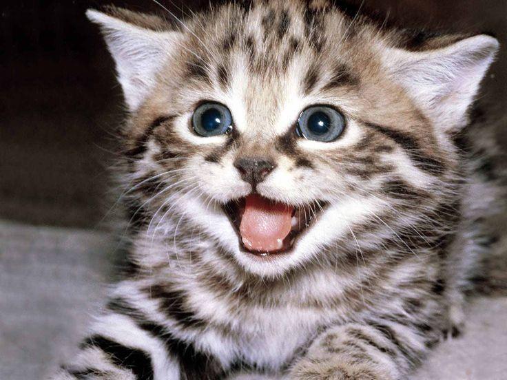 Kitten Season Is Approaching Bezaubernde Katzchen Susseste