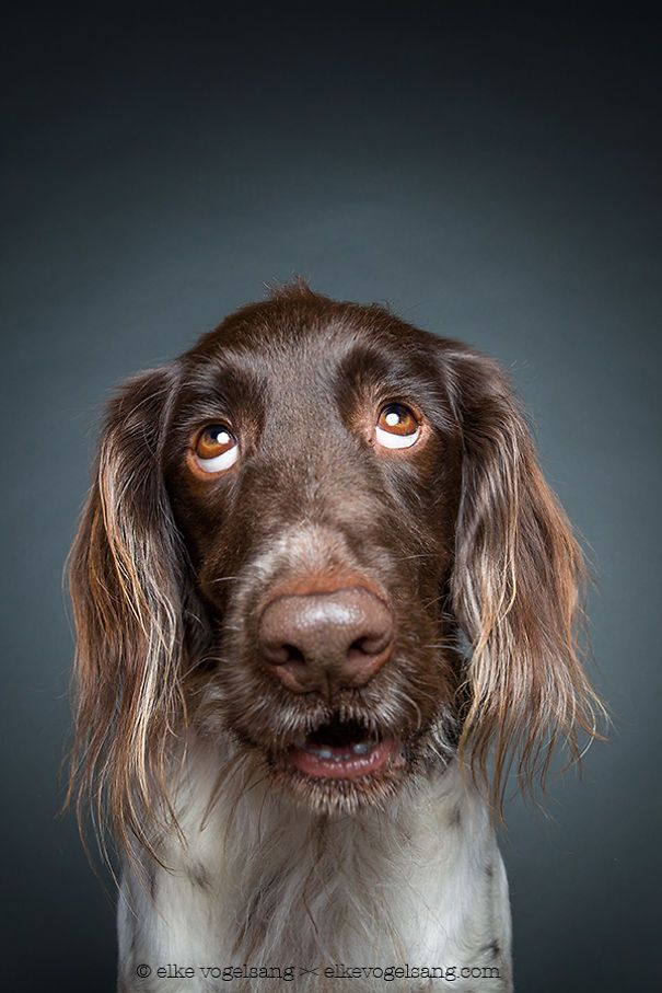 Intimate Portraits Reveal Amusing Facial Expressions of Skeptical Dogs #mydogtheskeptic