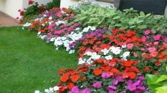 Questa pianta dai colori vivaci necessita di poche attenzioni ma garantisce una fioritura quasi perenne