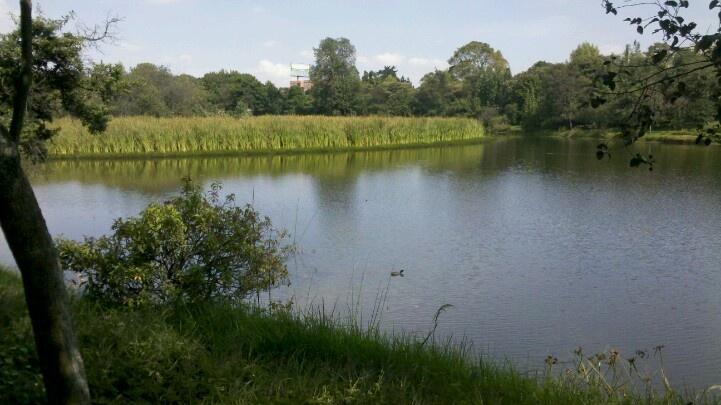 #Bogotaniando por @HumedalesBogota en Santa Maria Del Lago. Excelente labor de @AmbienteBogota