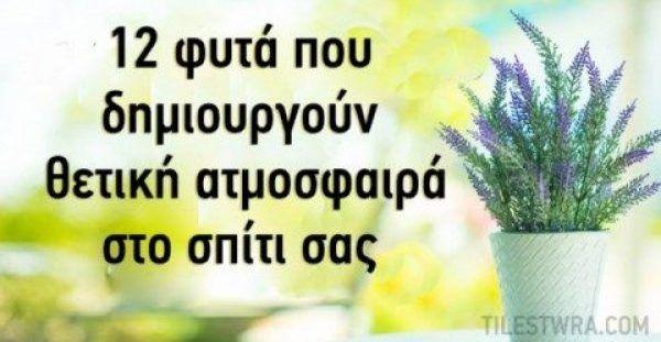 12 φυτά που δίνουν θετική ενέργεια στο σπίτι σας