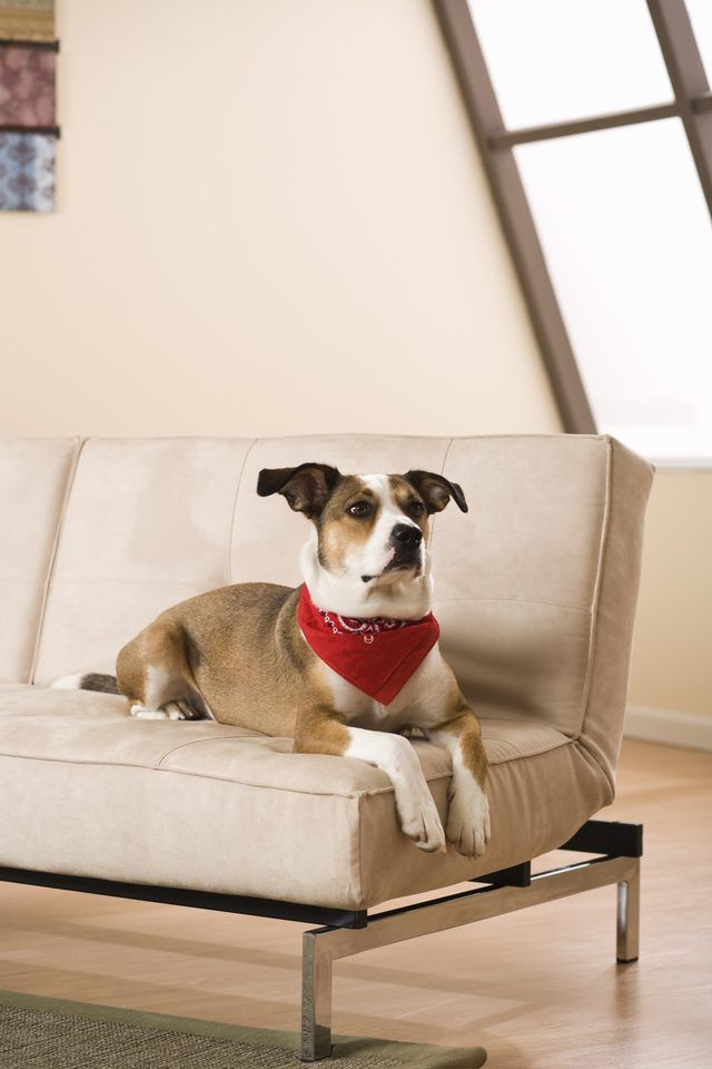 Clean Pet Odors From Furniture
