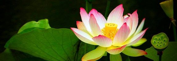 Kundalini awakening – Self realization #kundalini,kundalini #awakening,meditation,self-realization,meditate http://japan.nef2.com/kundalini-awakening-self-realization-kundalinikundalini-awakeningmeditationself-realizationmeditate/  # This Self-realization workshop provides you with a simple, first-time experience of Sahaja Yoga Meditation and Kundalini awakening. It takes 2 to 25 minutes to complete this workshop. If you want to get information prior to this workshop, please visit the…