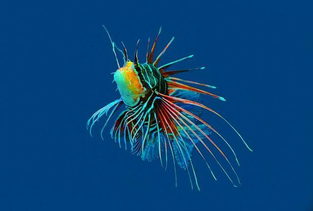 Koralle, Riff, Fisch, Meer, Rot - Kostenloses Bild auf Pixabay