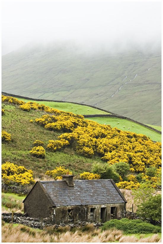 """I heard you went to Ireland...I haven't seen it in many years. Is it still green then, and beautiful?    Wet as a bath sponge and mud to the knees but, aye, it was green enough.""   ― Diana Gabaldon, The Scottish Prisoner"