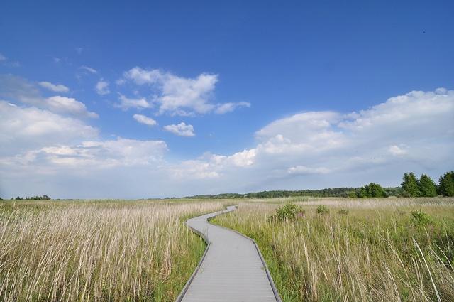 Boardwalk at Presqu'ile Provincial park