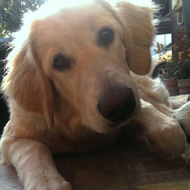 #dog #puppy #cute #howavart