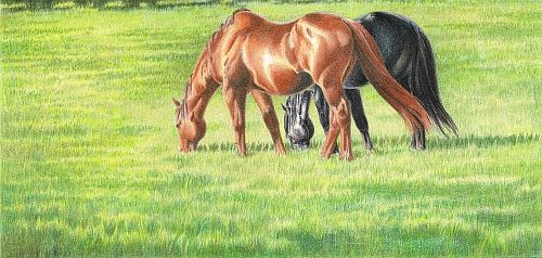 Eight step to drawing better summer grass in colored pencil.