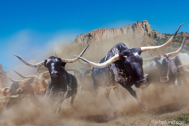 I created this stampeding herd of longhorn cattle photo twenty years ago, but the image is still viable and dynamic.