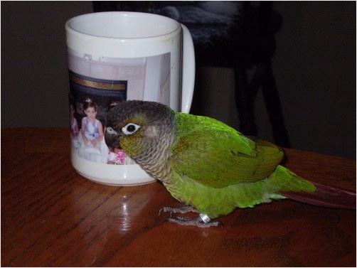 Pretty Bird / my bird Olive