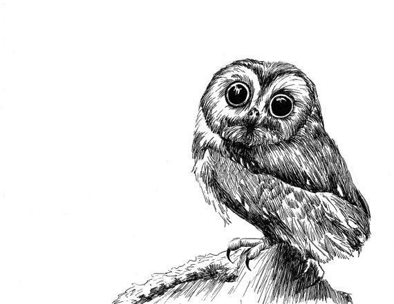 Cute SawWhet Owl Pen and Ink Print