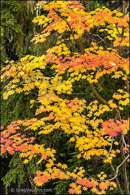 73 best native plants landscape images on pinterest