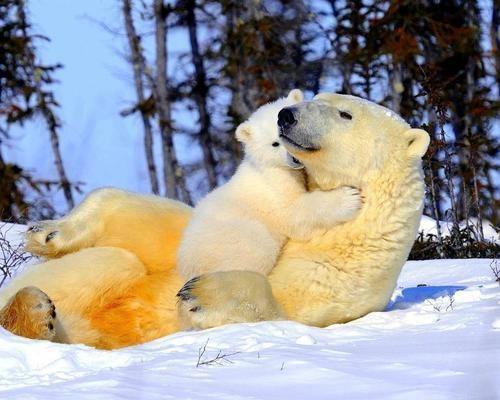 mom & cub ♥