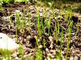 When to Plant Grass Seed in Your State. @James Sermons