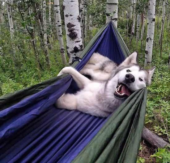 un chien qui dort dans un hamac