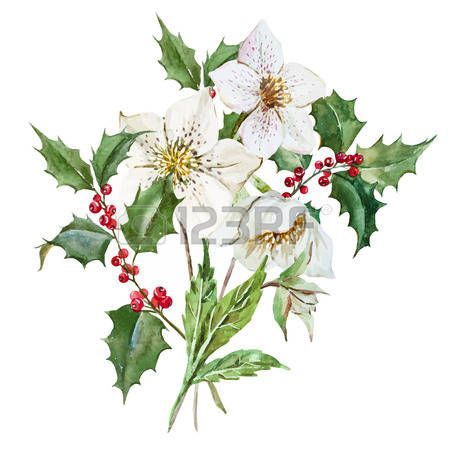 Gyönyörű kép szép akvarell karácsonyi virágok photo