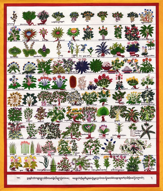 tibetan medicine essay Tibetan medicine tibetan medicine, developed over the course of over one thousand years in the isolated mountainous terrain of tibet and preserved despite china's.