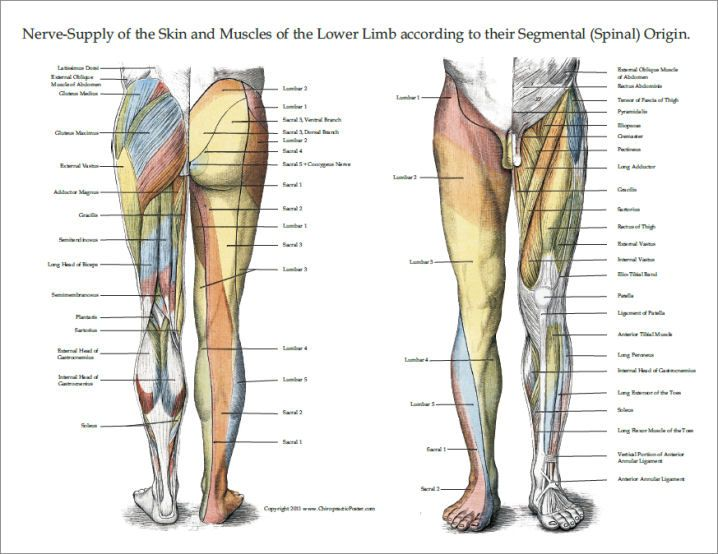 18 best Upper Limb images on Pinterest | Anatomy, Human ...