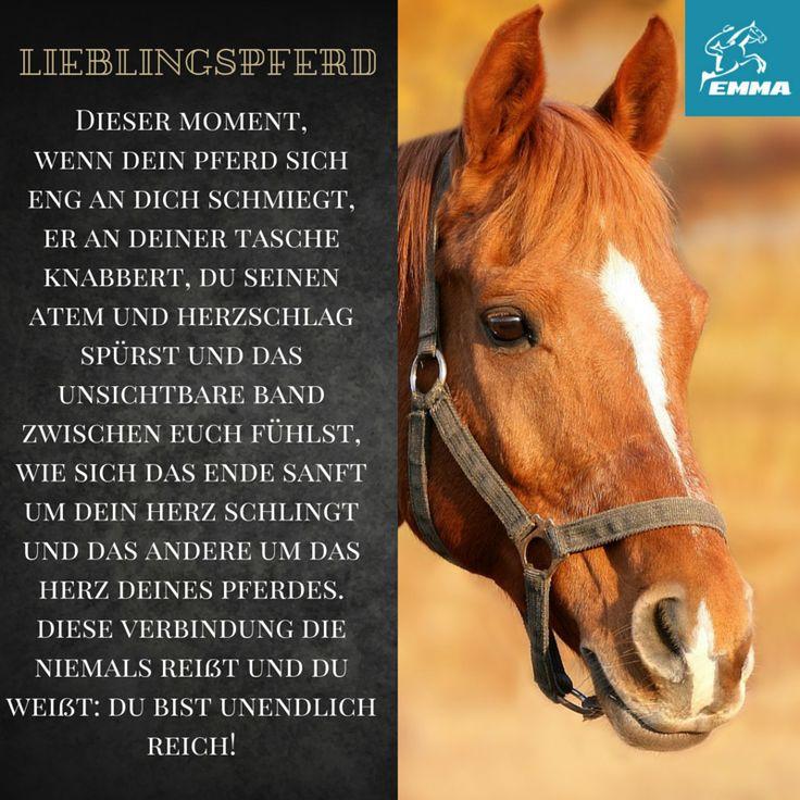 Pferdesprüche & Pferd hustet-emma-pferdefuttershop.de(2)