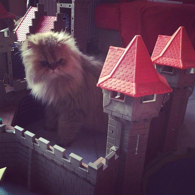 gatito en castillo #playmobil