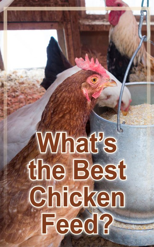 Backyard Poultry Magazine - Chicken Feed: Does Brand Matter? ~ Our Chickens ~ Pinterest