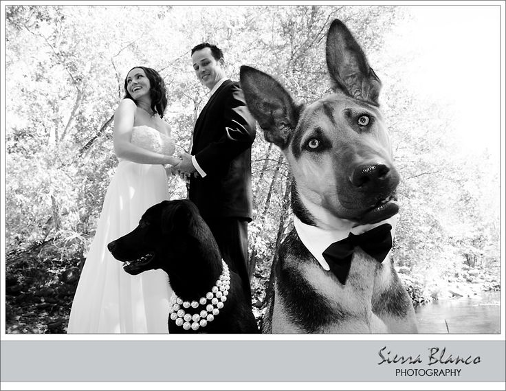 Trashing the Wedding dress shoot with Dogs I will do this with my dogs dress them up like that at least