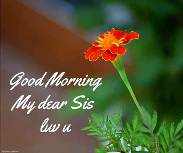 120 Lovely Good Morning Wishes And Greetings For Sister Good Morning Wishes Good Morning Sister Good Morning Sister Images