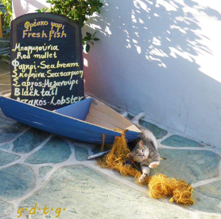 Το Ελληνικό Χρέος στη Γαστρονομία: Φολέγανδρος (Μέρος 1ο)  Καλασούνα