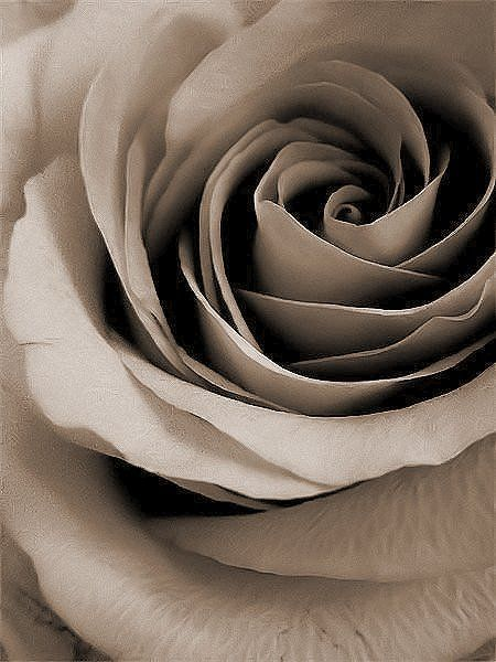 Hi Donna, thank you for the invitations! I hope you are doing a bit better. Take care and have a wonderful week. : )) xx