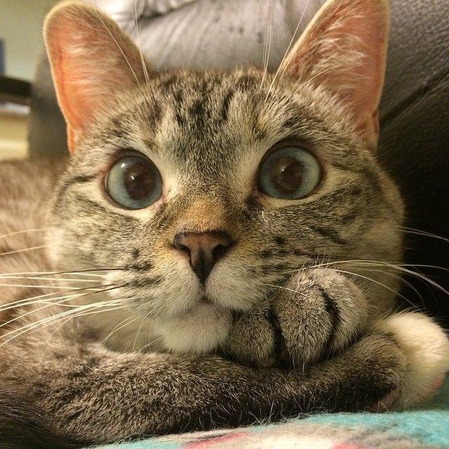 Картинки на аву для кошки
