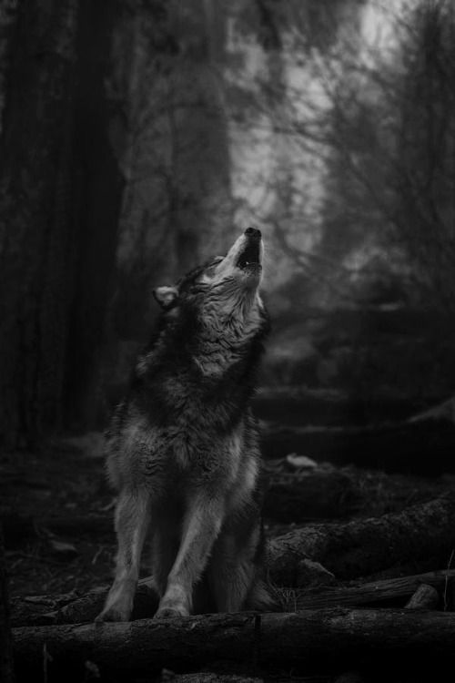 Never Cry Wolf ♥ : Foto
