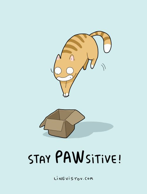 <3 STAY PAWSITIVE, ALWAYS!!! <3 why be unhappy when you can jump into a cardboard box and be a happy cat ;)