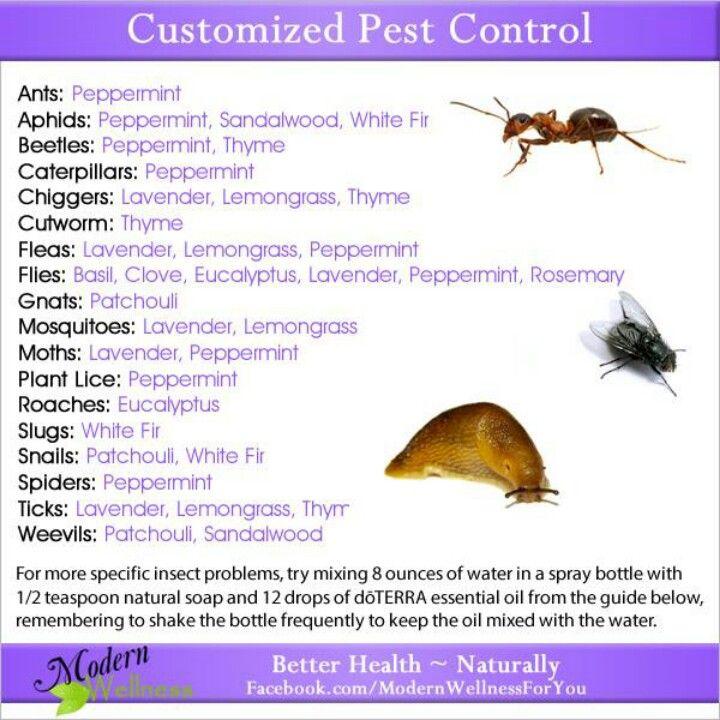 Pest control doTERRA   Essential oils/Natural Remedies ...