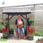 Tiket Masuk Kebun Bunga Begonia Lembang.