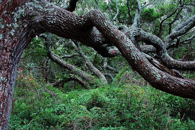 Springer's Point, Ocracoke Island