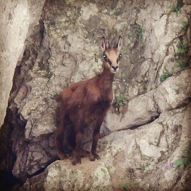 # wildlife