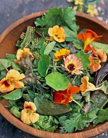 Nasturtium flowers to garnish a summer salad