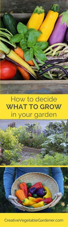 Ask yourself these important questions before your buy plants or seeds for your garden this season.