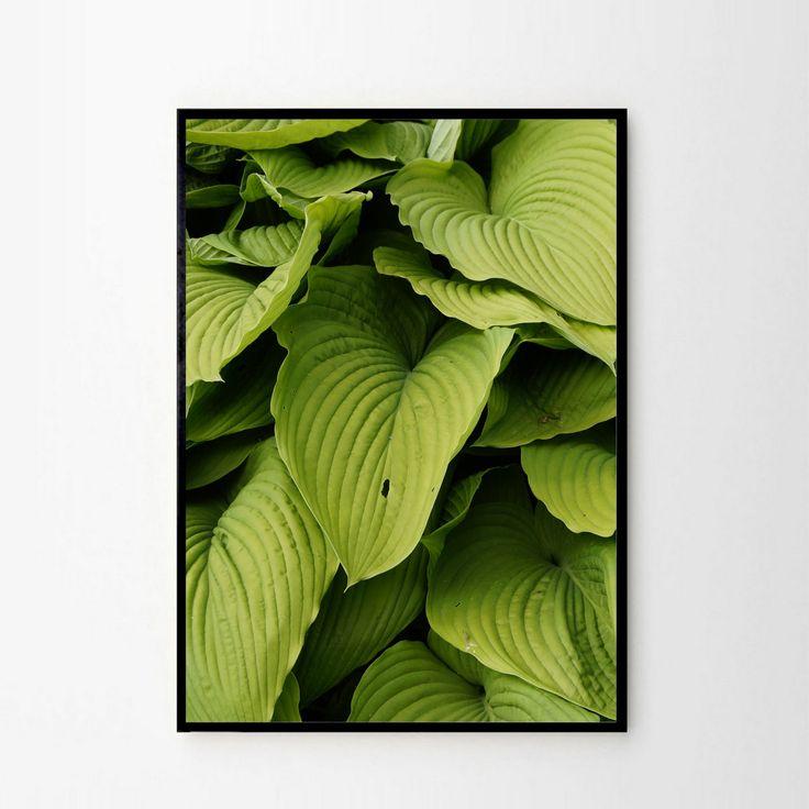 Foto plakat - Zielone liście