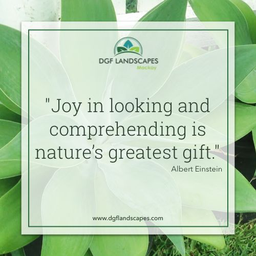 """""""Joy in looking and comprehending is nature's most beautiful gift."""" - Albert Einstein 🌼 #TuesdayTruth"""