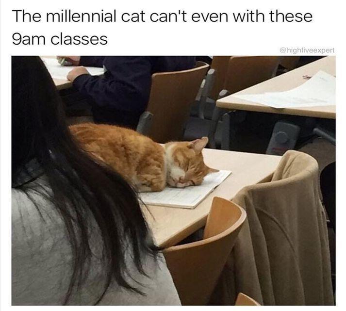 40 Animal Memes