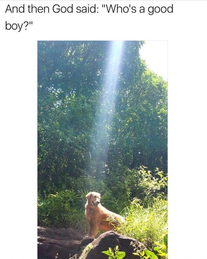 Majestic doggo funny pics, funny gifs, funny videos, funny memes, funny jokes. L... - #Funny #Pic - funny pics, Latest Funny Meme, Random Funny Meme