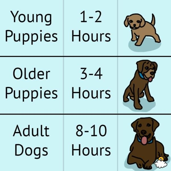 What To Do When Your Dog Won T Potty Train