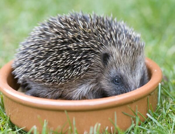 Here's a cute pic to thank those signing up to our Hibernation Survey